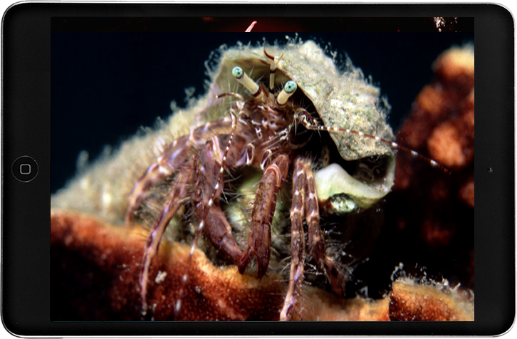 Underwater Microcosmos of Mani